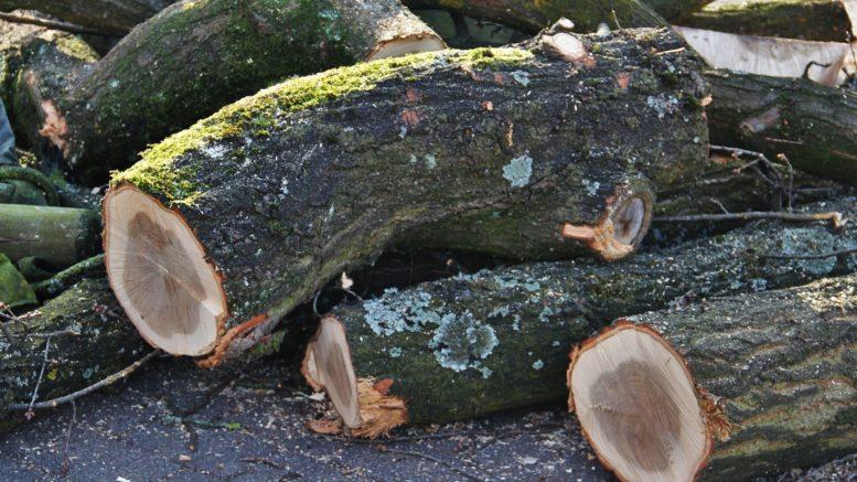 abgesägte Baumstämme