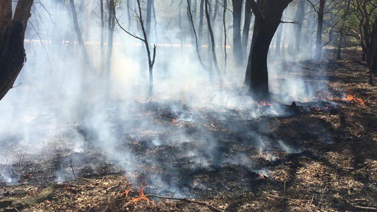 Waldbrand im Kreis Viersen